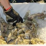 A vendor's hand grabs a handful of oysters for an order.